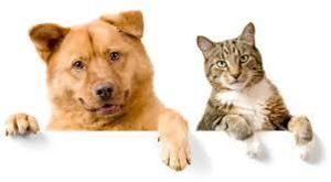 Are dogs superior to cats?