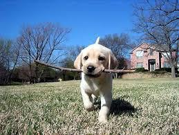 do you like to play fetch?