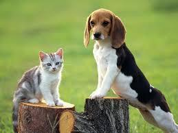 Ok what do you think of dogs and cats?