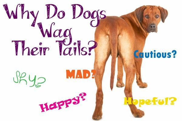 Lets start with a easy one, What does it mean when ur dog wags her/his tail?