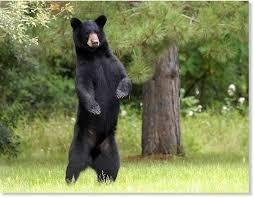 RP 1: You are walking in a forest and suddenly a bear attacks you What do you do?
