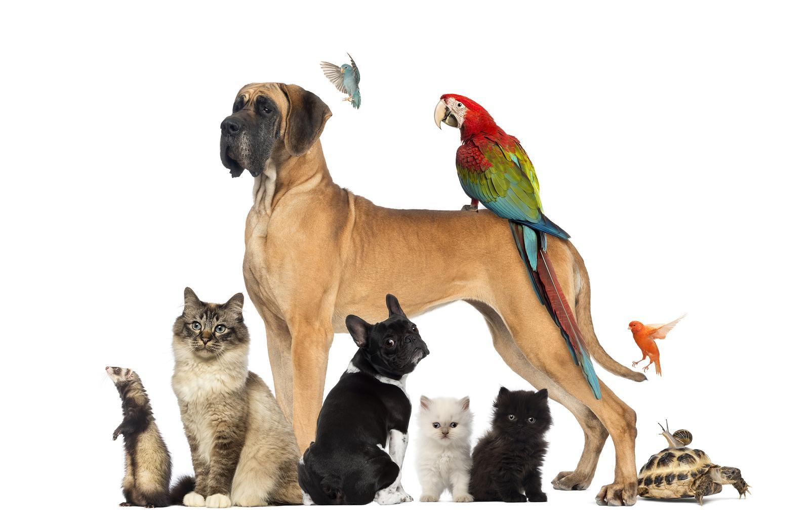 Which animal would you keep as a pet?