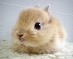 What is a baby rabbit?