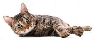 Roleplay time. Picture this- you are a thunderclan cat on a morning hunting patrol minding your own business when you scent clan cat on your territory, when you see him/her you notice they don't seem to have a hostile glare towards you and calmly lie there. You have seen this cat before and sort of fancy them. What do you do?