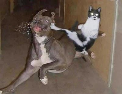 This...? Kung fu Kitty!