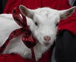 If you got a goat as a pet what would you do?