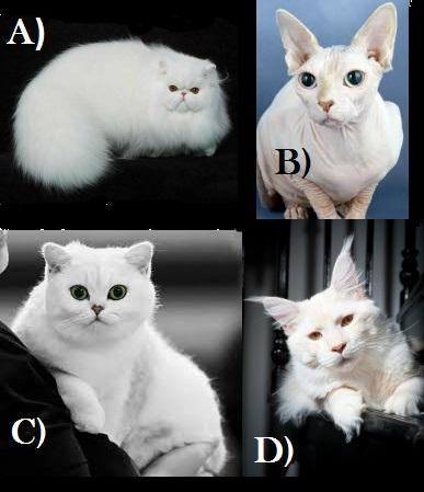 If Pellinore Warthrop was a cat, which breed would he be? (This is a crucial question, so choose carefully.)