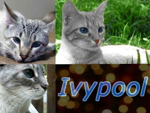 Question Four; Which Of These Events Did Ivypool Live To See?