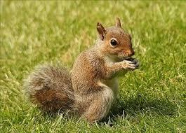 How would you think squirrel would taste?