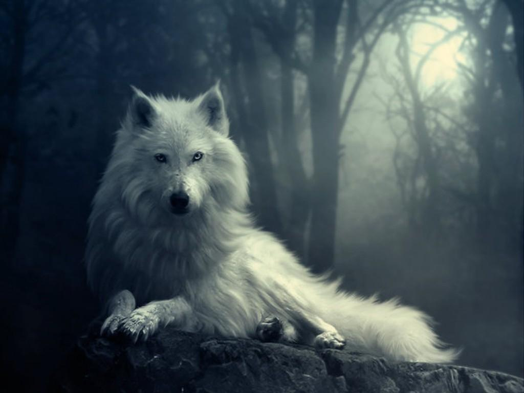 what kind of wolf have u always thought you were?