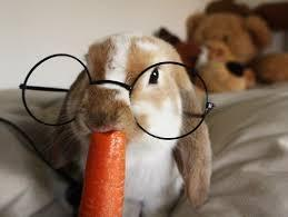 Are carrots actually sugary for bunnies?