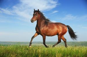 How can you be scared of a tiny dog and not of a domino horse? Trust me, I am like this, and domino horses are massive.