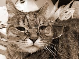 Role-play time! You see an elder from another Clan, walking into your Clan's base. The elder looks tired, hungry, and bedraggled. The Clan leader for its Clan is not sympathetic with elders. What do you do?