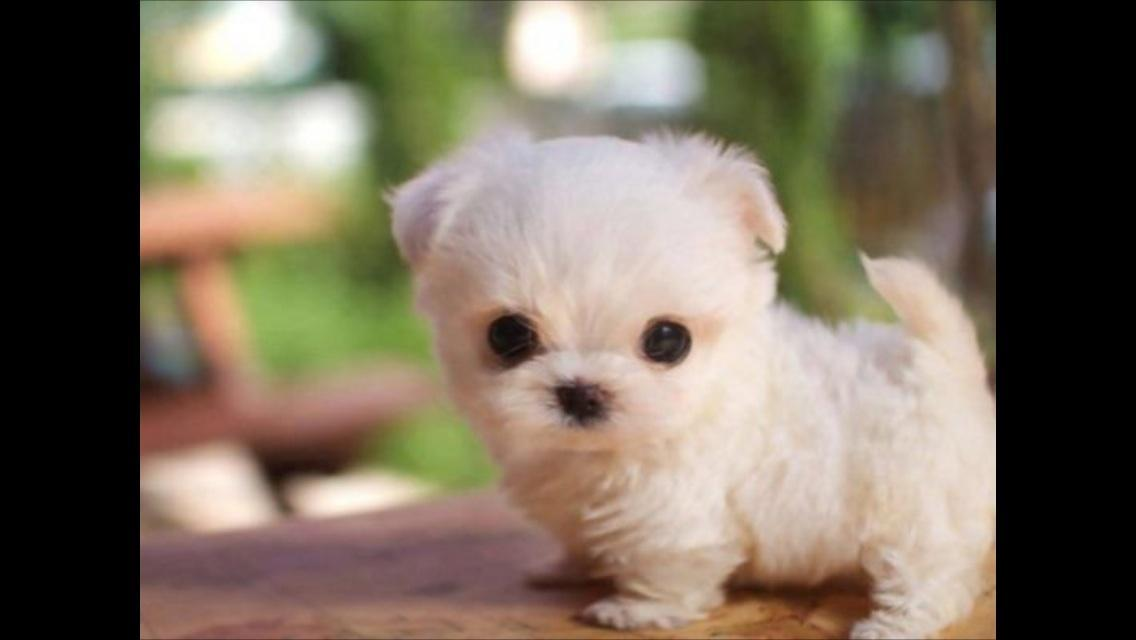 Is this lil' puppy cute or not?!