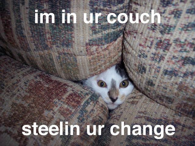 Has your cat ever gone between your cushions before?