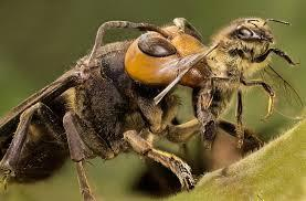 Who would win in a fight giant ant or giant bee