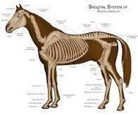 Is having to know horse body parts important to know when owning a horse?