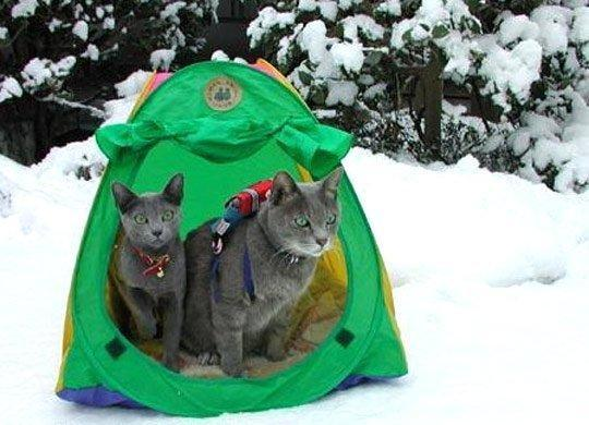 Do you like camping?