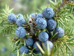 Juniper berries are used for: