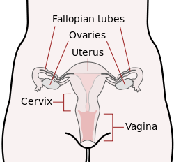 Favorite Part of Female Anatomy