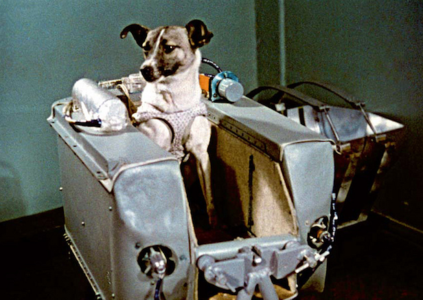 Who was the first dog in space?