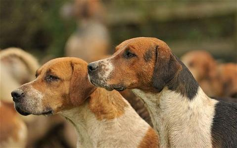 Dogs - what sound do these hounds make?