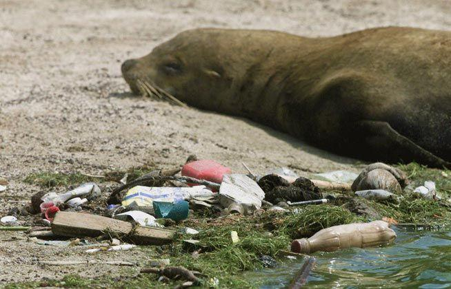 How many marine mammals are estimated to die due to sea pollution?