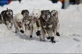What do the Siberian Husky, the Alaskan Malamute and Samoyed all have in common?