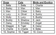 Best pet name(s)