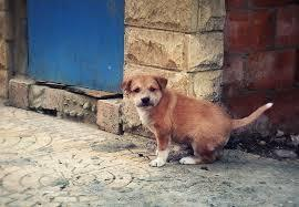 While you're walking down the street, you see a lost puppy huddling in the shadows. How is your reaction?