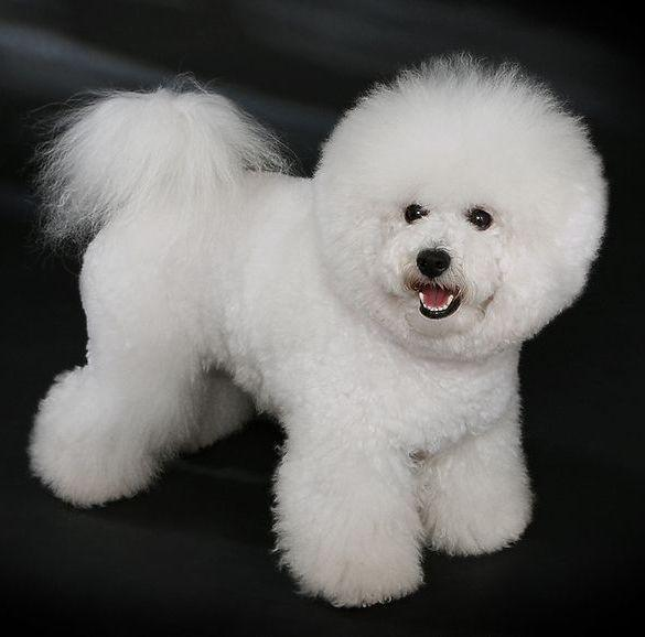 What dog dog breed is this ( small )
