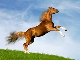 I love horses do you