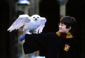 Harry's Owl's name is...