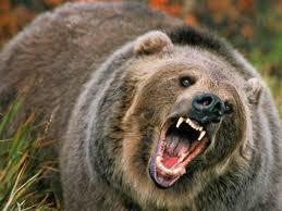 You are being mauled by a bear what is your reaction?