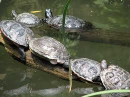 What do you call a group of turtles?