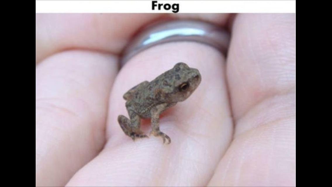 Are frogs that disgusting..?