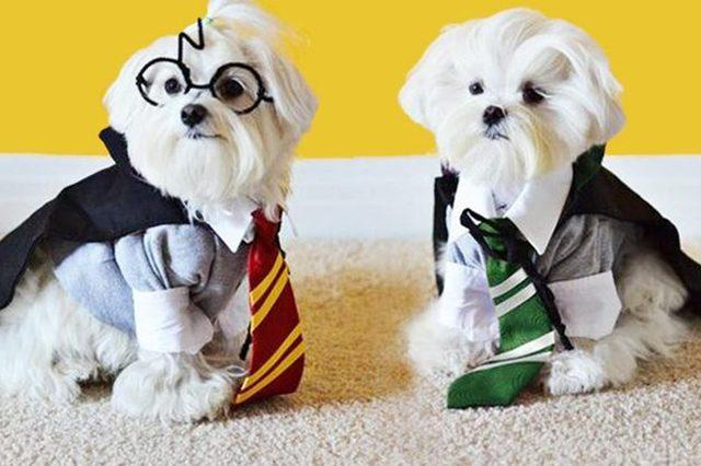 What pet would you choose to accompany you to Hogwarts?
