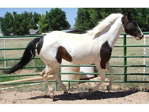 What color would your dream horse be?