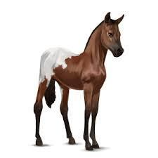 which of these is NOT a breed of horse on the game?