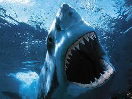 how many rows of teeth do sharks have?