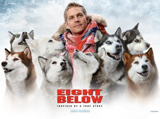 which type of dogs star in eight below?