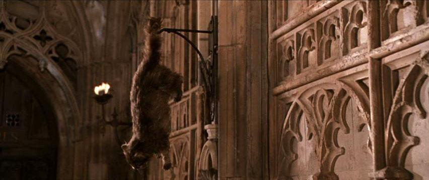 Who's cat dies/is petrified in the second book/movie? (Chamber of Secrets)