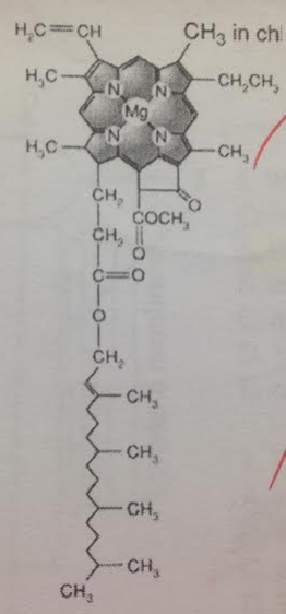 Where is this molecule most likely to be found?