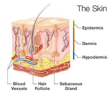 What is the name of the substance that gives skin and hair its pigment?