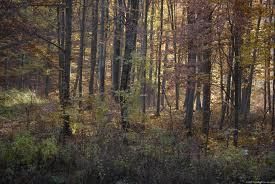 What's your ideal Clan home?