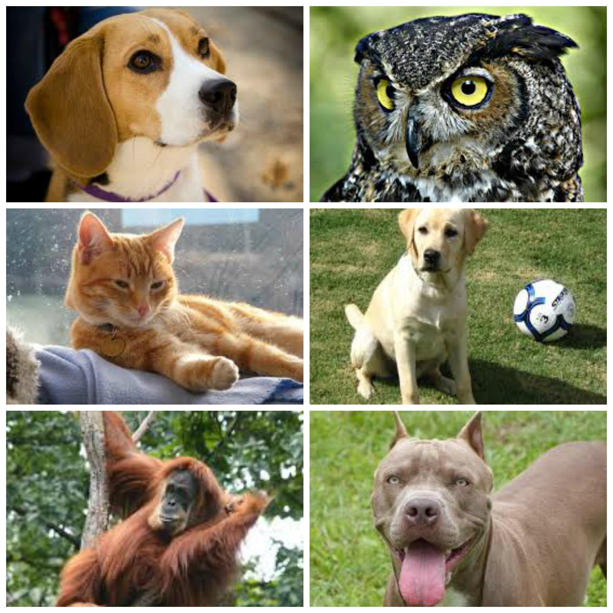 If you were an animal, which of these would you be?