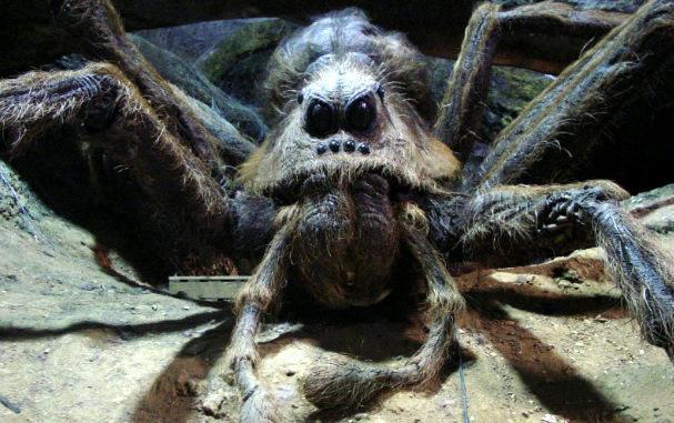 What is Hagrid's pet spider's name?