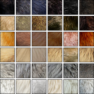 How many coat colors do wolves come in?