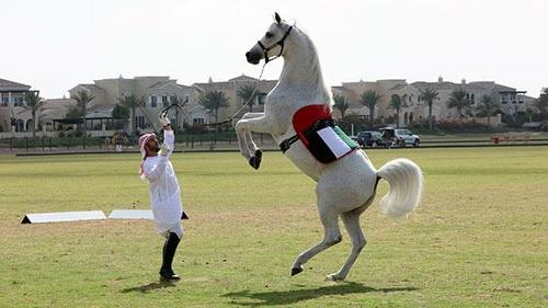 What is the fastest 10 m by a horse on its hind legs? (Achieved by Desert)