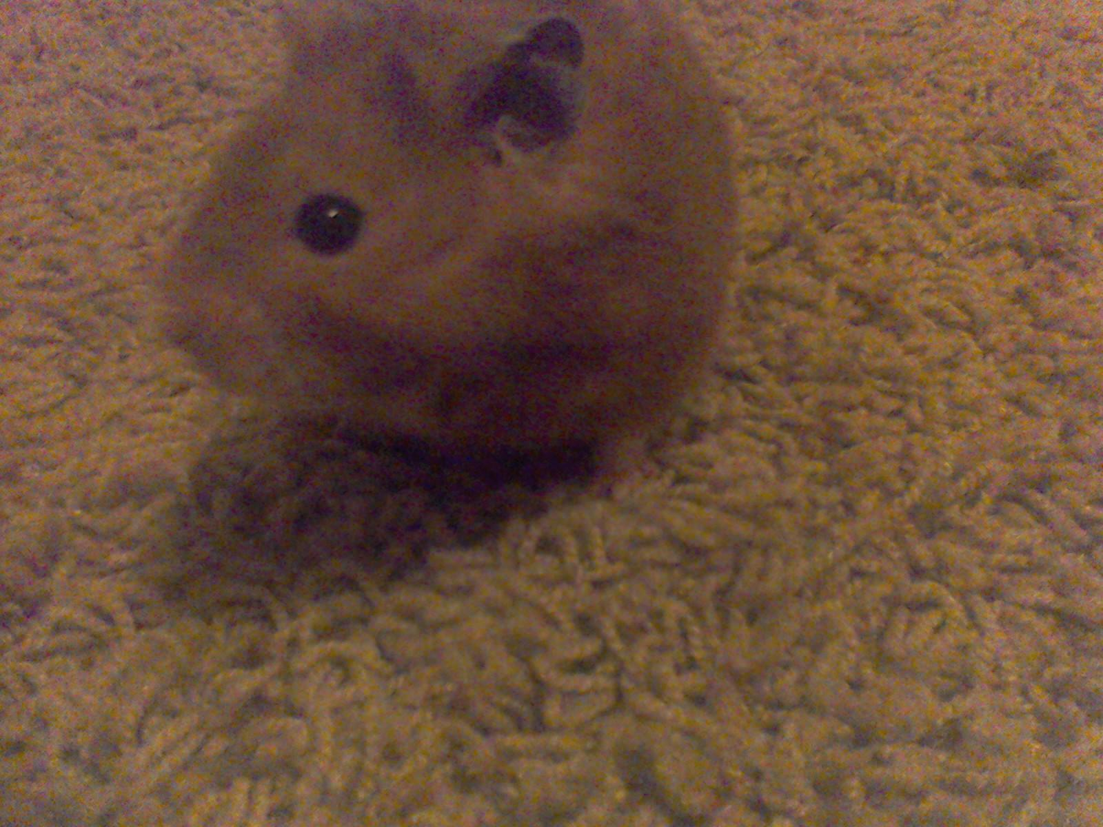 Do you like my hamster? (his name is Cocoa)